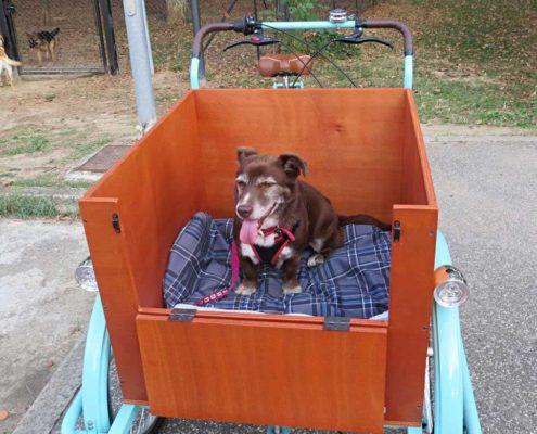 Cargobike Trasporto Animali